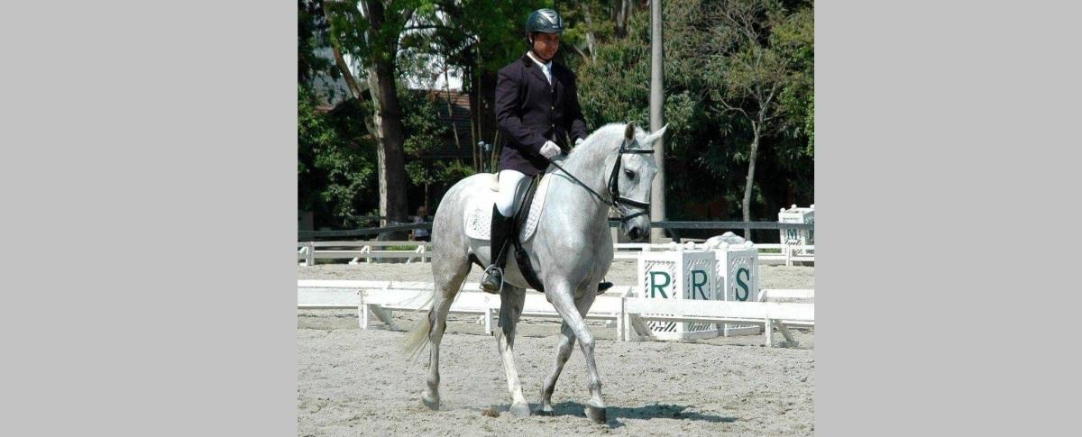 Como preparar o cavalo para o círculo de 20m permitindo que ele abaixe a cabeça?