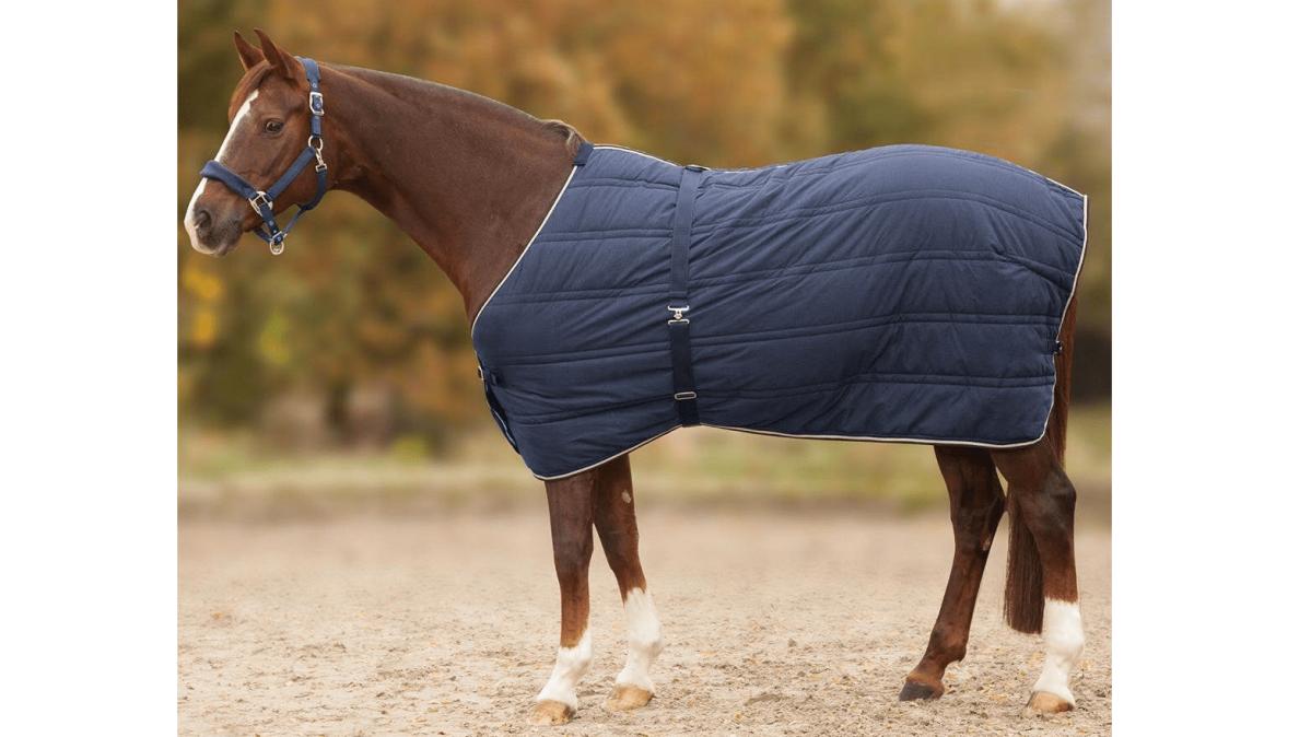 6 perguntas e respostas sobre cuidados com os cavalos no inverno