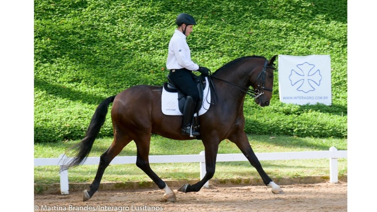 Primeira etapa do Ranking de Adestramento Interagro destaca geração L e cavalos maduros